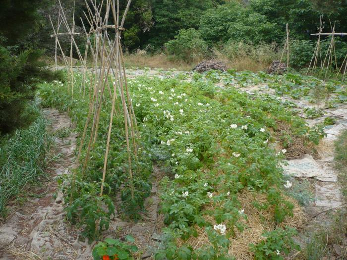 Vull crear un espai bonic i abundant en UN TERRENY desaprofitat