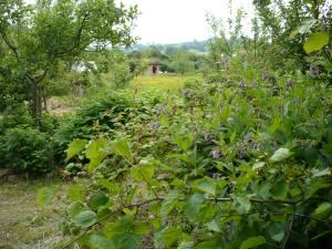 Forest Garden de Primrose Farm, el primer que vam conèixer