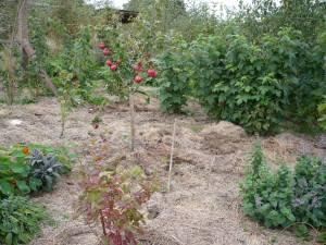 Forest Garden en els seus primers estadis (Karuna, Anglaterra)