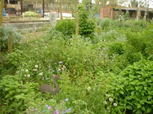 El nostre verger inicial a Phoenicurus, amb plantes comestibles, aromàtiques, arbustos i petits arbres fruiters