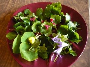 Amanida que conté Pimpinella saxifraga i altres fulles del verger