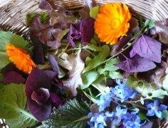 florscomestibles
